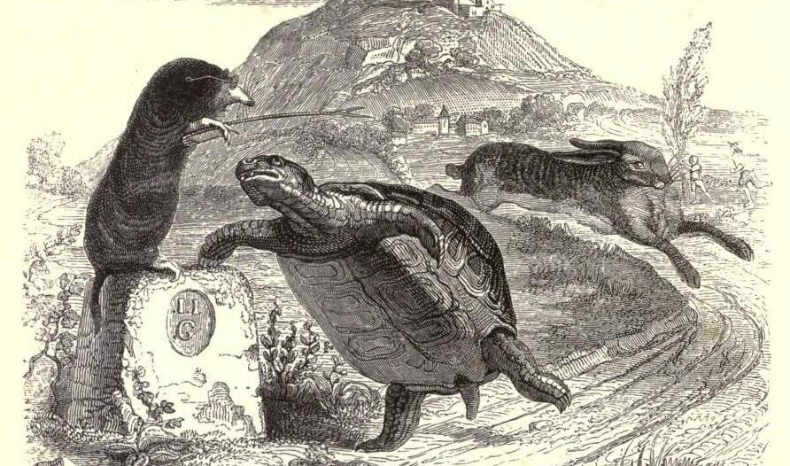 Le lièvre et la tortue, Wikipedia